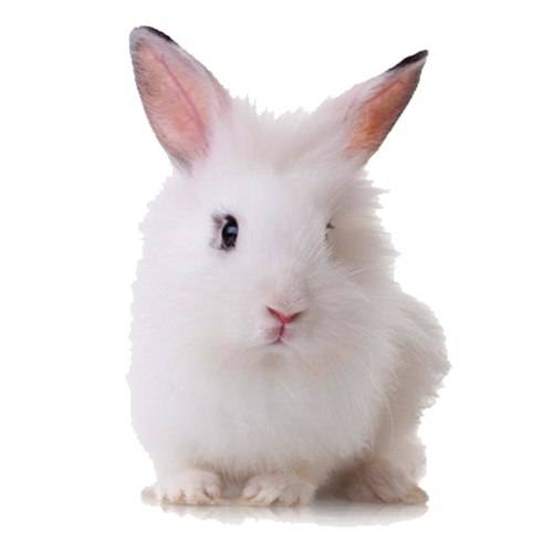 Как в домашних условиях можно приучить кролика к лотку и что нельзя делать