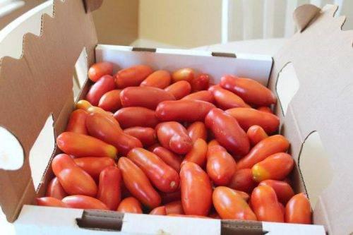 Томат французский гроздевой: описание сорта помидоров, фото полученного урожая и отзывы фермеров о его выращивании