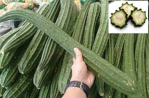 Люффа: природная мочалка, здоровая еда или домашний декор. люфа— растущая мочалка. выращивание, применение