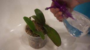 Враг не пройдет! болезни и вредители орхидей фаленопсис, их лечение и фото пораженных участков