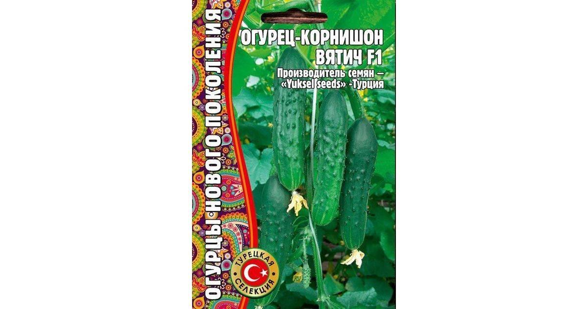 Огурец вятич: описание сорта, фото, урожайность