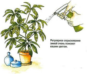 Уход за комнатными растениями - советы опытного садовода