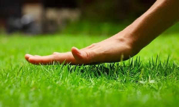 Как сделать газон на даче весной своими руками: правильная подготовка участка и посев травы