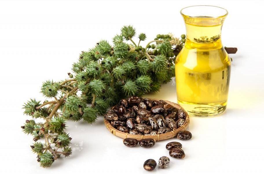 Подкормка цветов касторовым маслом