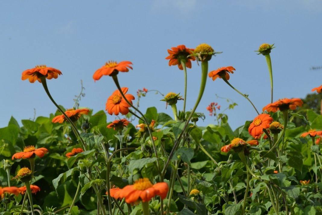 Посадка петунии на рассаду в 2021 году: сроки посева семян, благоприятные дни |