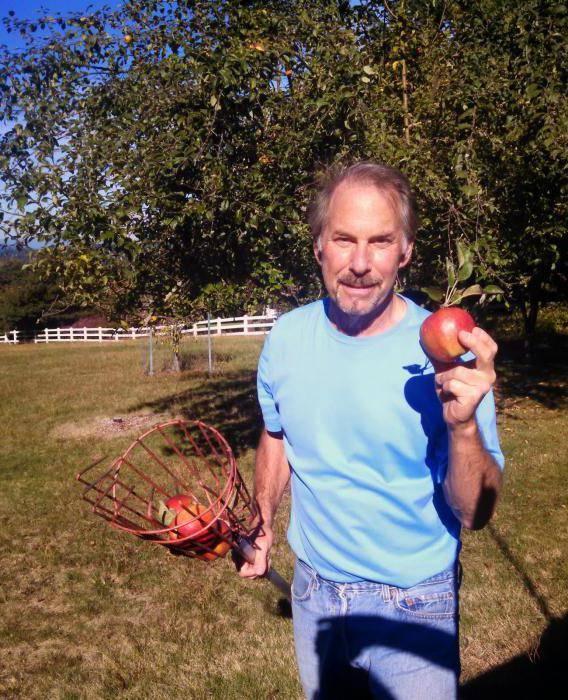 Разновидности приспособлений для сбора яблок и как сделать своими руками