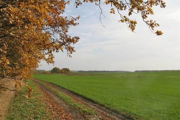 Оптимальные сроки посева озимой пшеницы — пропозиция