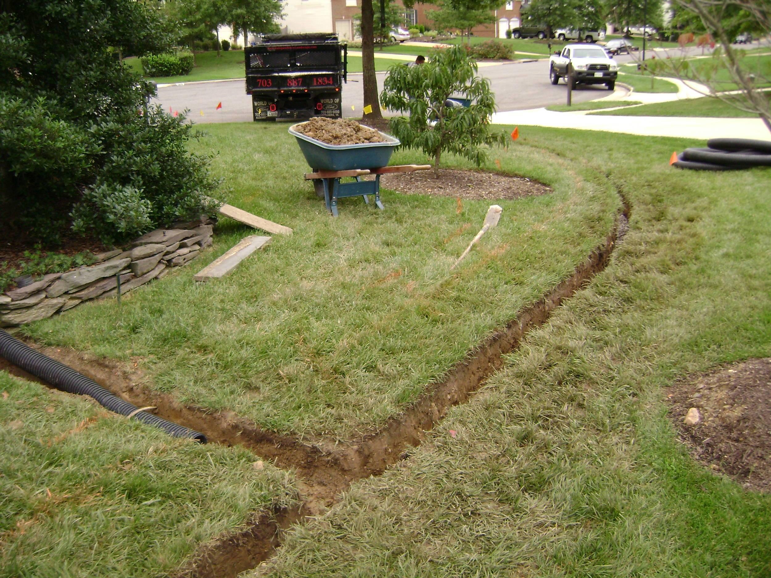 Газонная трава: когда сажать газонную траву своими руками - весной или осенью? когда сеять, расход семян