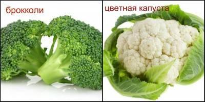 Брокколи и цветная капуста: это одно и то же или нет, чем отличаются сорта, как выглядят на фото, сколько калорий содержат, а также чем полезны эти овощи? русский фермер