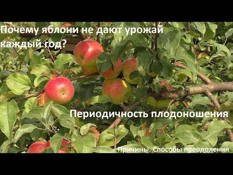 Как ухаживать за яблоней – полное руководство от «зеленой грядки» — agroxxi