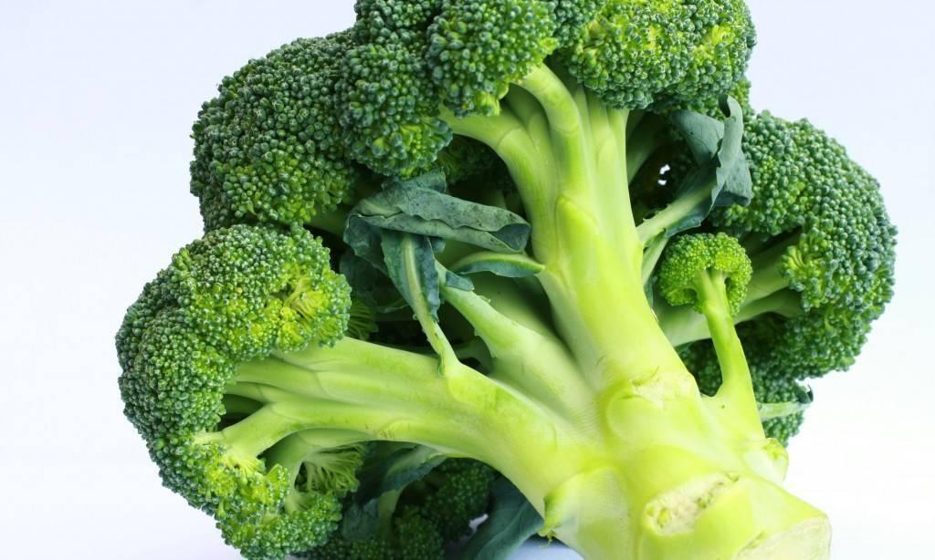 Польза ростков брокколи и их выращивание