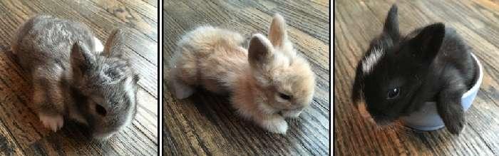В каком возрасте и когда отсаживают крольчат от крольчихи или через сколько дней можно отсаживать: советы с видео в каком возрасте и когда отсаживают крольчат от крольчихи или через сколько дней можно отсаживать: советы с видео