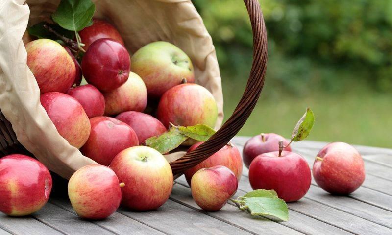 Яблоня краса свердловска: описание, фото, отзывы