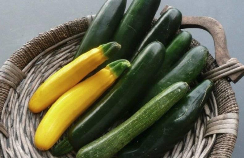 Какие витамины есть в кабачках и чем он полезен