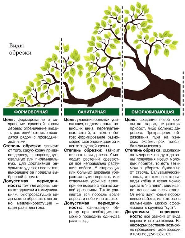 Описание сорта яблони юнга: фото яблок, важные характеристики, урожайность с дерева