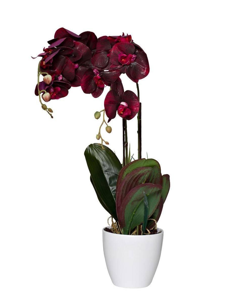 Крупноцветковые орхидеи с одним или несколькими самыми большими цветами, их название, фото и видео от специалистов