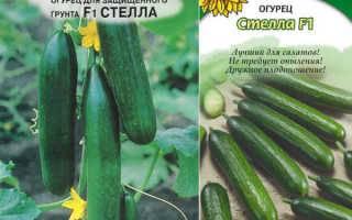 Сорт огурцов стелла: характеристика и важные правила выращивания