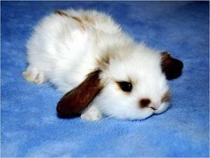 Сколько живут обычные и декоративные кролики в домашних условиях