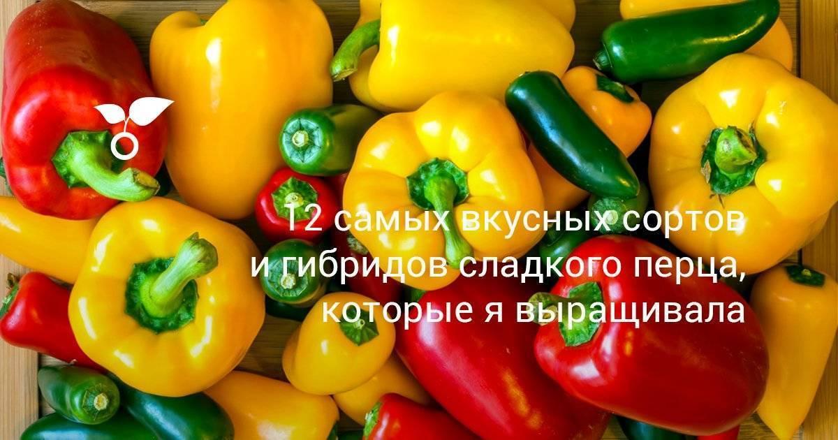 Сочный и урожайный перец «красный бык» для выращивания необычайно вкусных плодов на своем участке