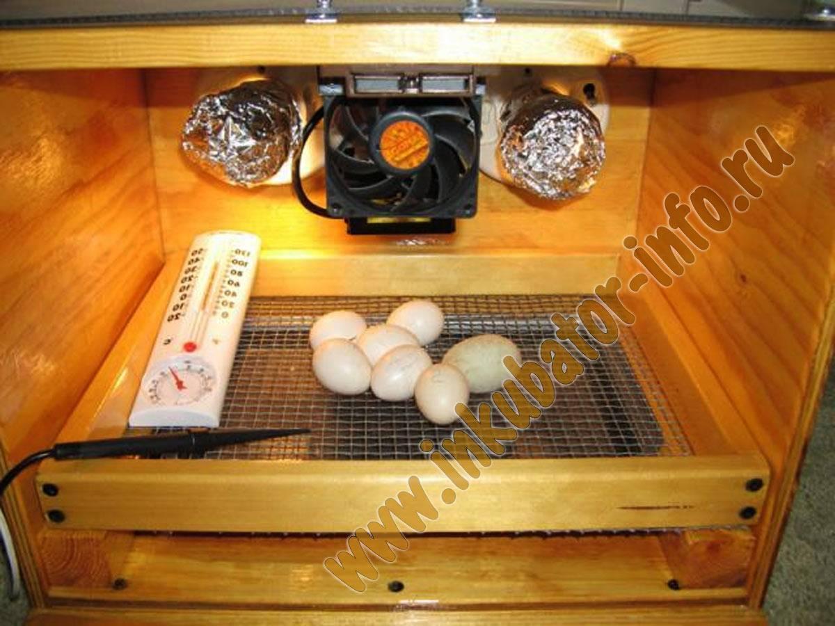 Инкубаторы для перепелов своими руками: чертежи с размерами и пошаговая инструкция по изготовлению