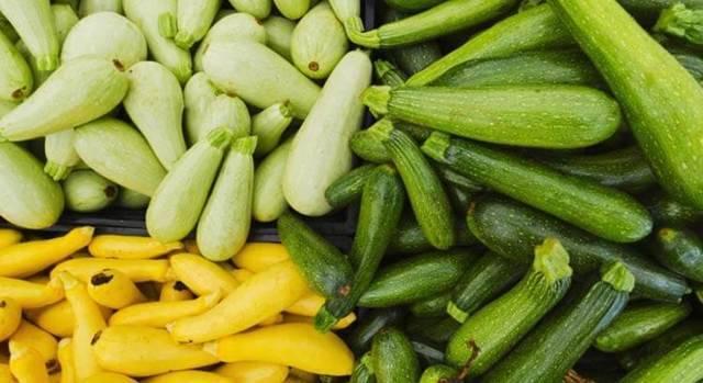 Как растут кабачки и как за ними ухаживать — секреты хорошего урожая