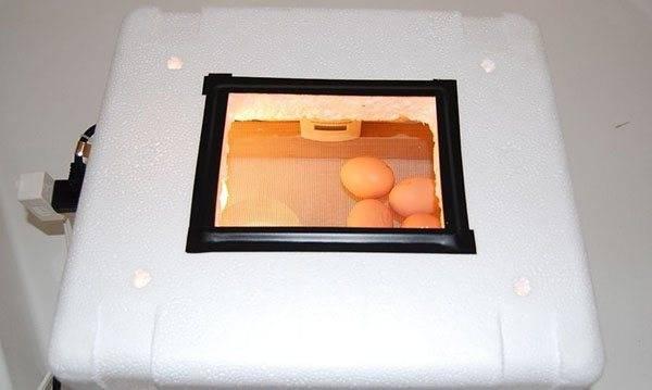Инкубация перепелиных яиц - секреты, нюансы, таблицы и график инкубационного периода (видео + 125 фото)