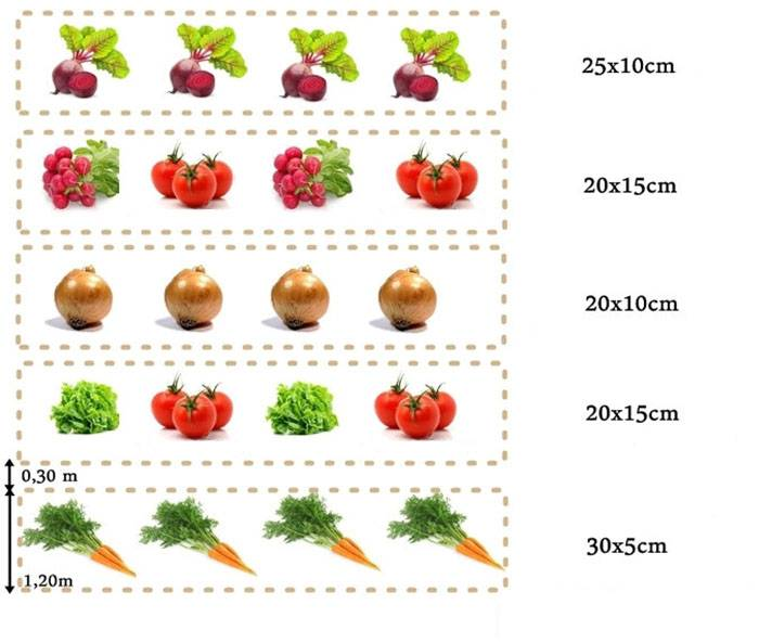 Схема посадки овощей на огороде: основные правила планирования, таблица совместимости культур