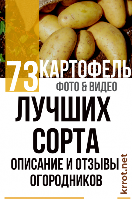Сорт картофеля сынок, описание, фото, характеристика и отзывы, а также особенности выращивания