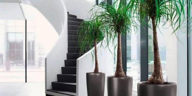 Неприхотливые комнатные цветы для квартиры и офиса: какие самые нетребовательные в уходе, в том числе тенелюбивые, красивые с бутонами круглый год и названия, фото