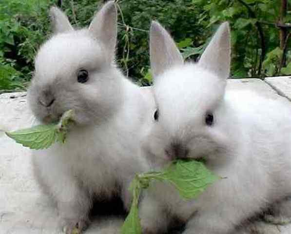Сколько раз в день кормить кроликов: суточная норма корма
