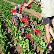 Окучивание картофеля: правила, сроки, способы, сколько раз проводить процедуру