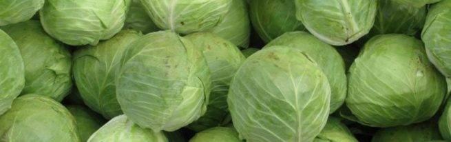 Голландские сорта цветной капусты, которые славятся своей неприхотливостью