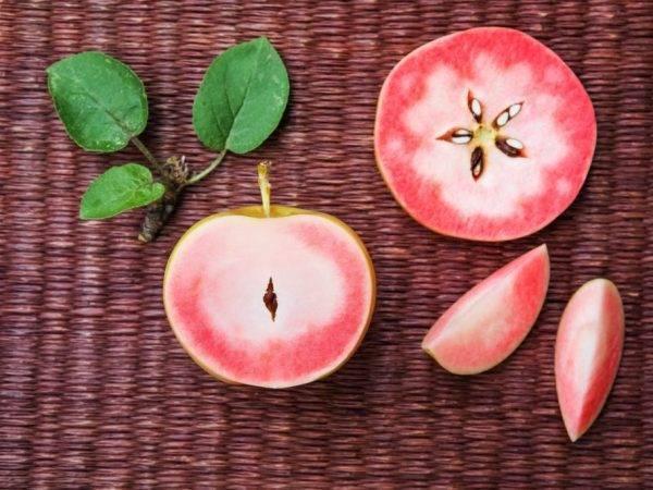 Сорт яблок розовый жемчуг: описание, особенности выращивания