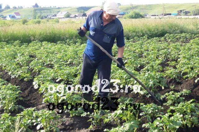 Пошаговая инструкция: как окучивать картошку различными способами. секреты богатого урожая для садоводов
