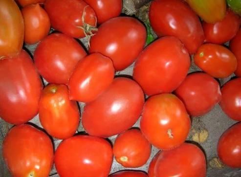Лучшие сорта томатов для засолки и консервирования - 25 сортов с фото и отзывами дачников