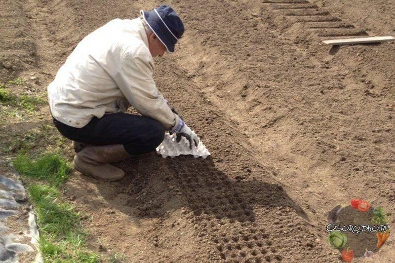 Как посадить перцы на рассаду правильно в домашних условиях