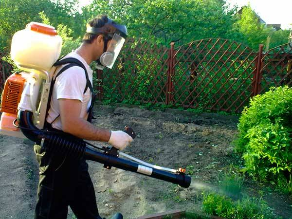 Как посеять газонную траву своими руками правильно - инструкция и уход