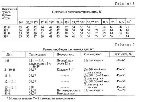 Инкубация цесарок таблица режима инкубации - скороспел