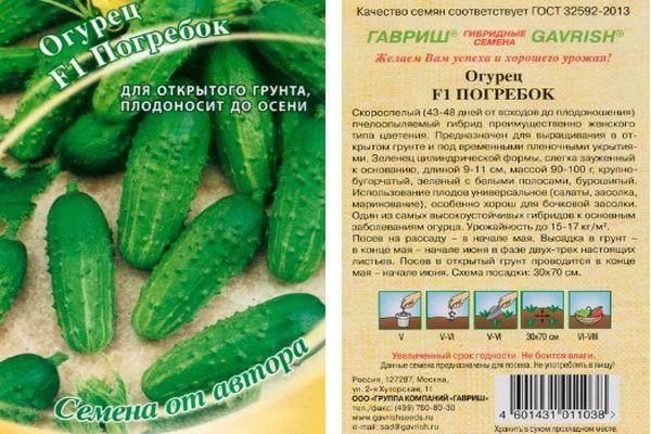 Огурцы погребок: описание сорта, сколько дают урожая, выращивание, фото
