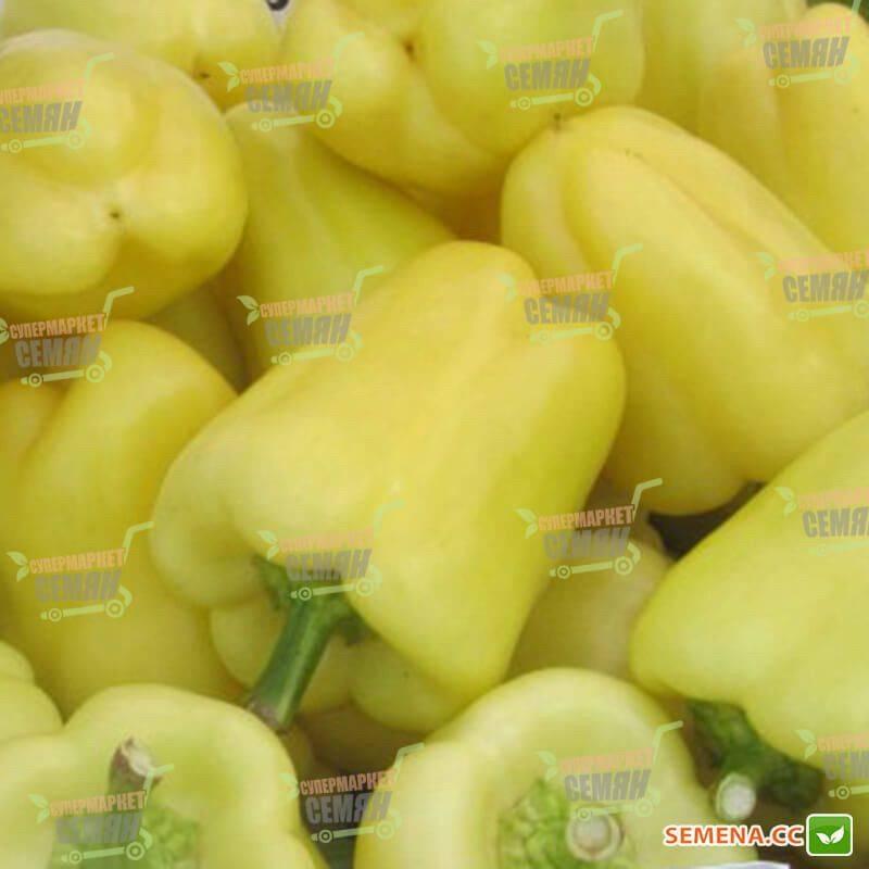 Перец бон аппетит f1: отзывы, фото, урожайность, характеристика