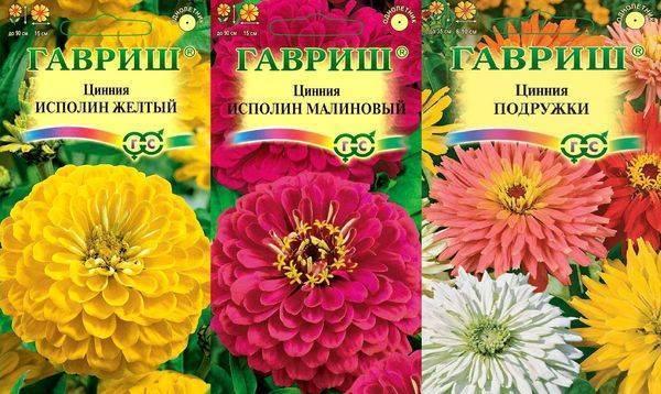 Цветок циния: описание сортов, выращивание на клумбе, уход за растением и фото цветов