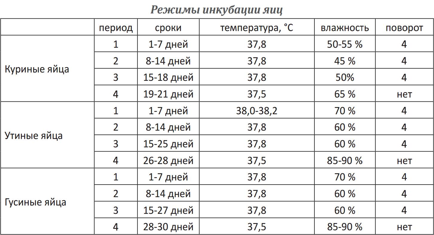 ᐉ инкубация цесарок - режим инкубации, требования к яйцам - zooon.ru