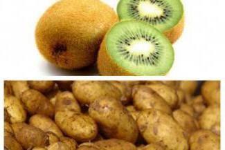 Описание сорта картофеля киви