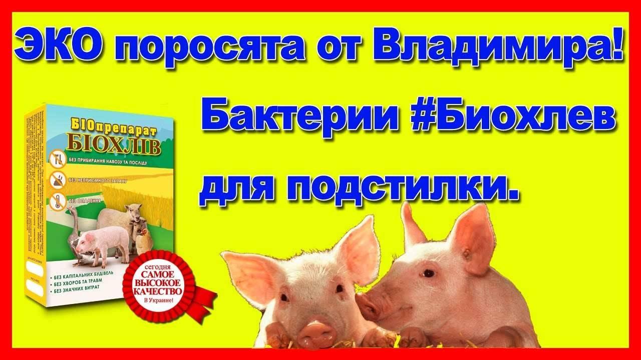 Разновидности подстилок для свиней