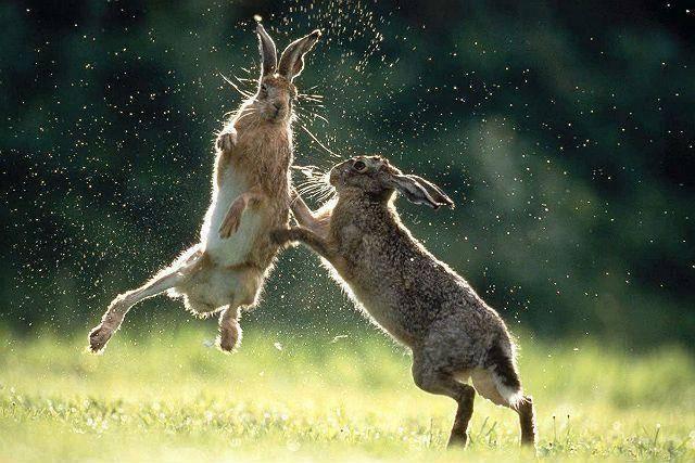Заяц – виды и описание