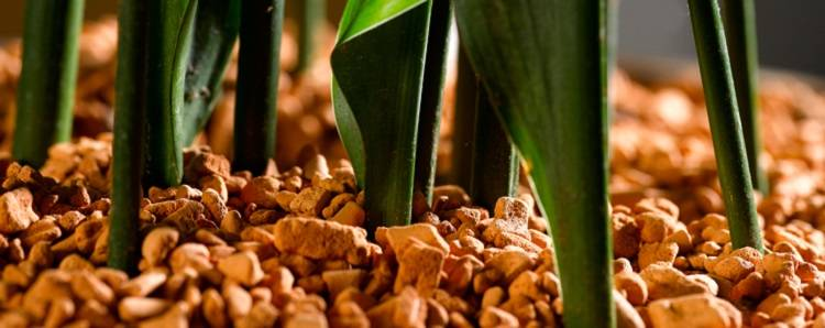 Грунт серамис для орхидей — немецкое качество для процветания