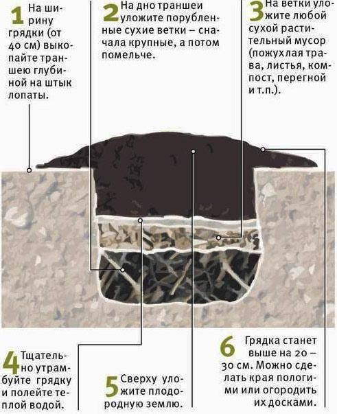 Высокие грядки для огурцов в открытом грунте с фото