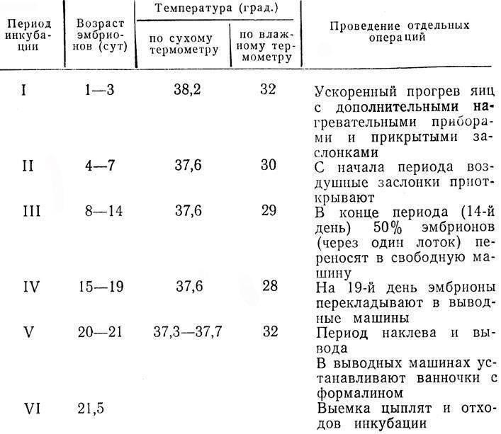 Инкубация цесариных яиц в домашних условиях: описание, режим, таблица