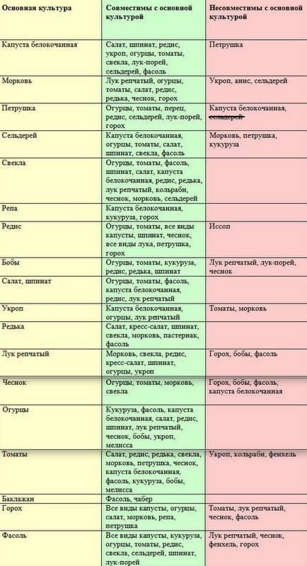 Совместимость растений в саду и огороде: таблица и описание