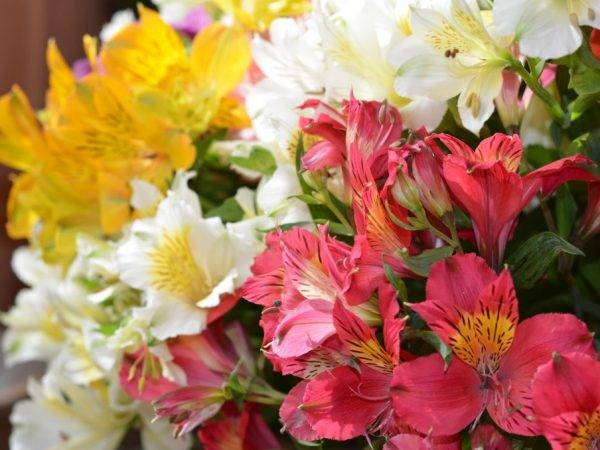 Виды орхидеи, их названия и фото, описание и содержание в домашних условиях, а также видео о том, как определить цветок в горшке по листьям - все редчайшие сорта